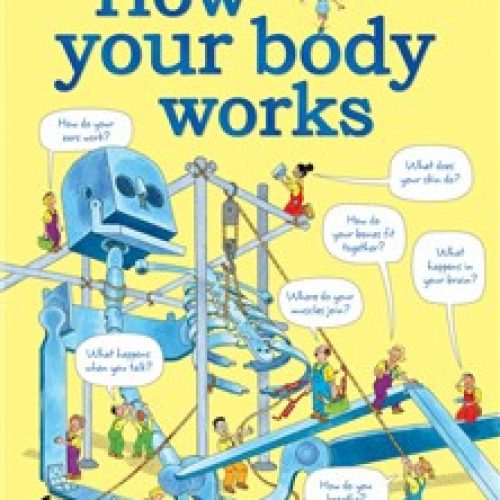 how-your-body-works-13